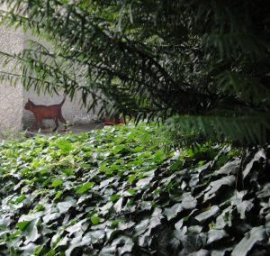 Real-size cat figure in the garden of Huttenstrasse 9, Zurich, where Erwin Schrödinger lived 1921–1926. Depending on the light conditions, the cat appears either alive or dead.